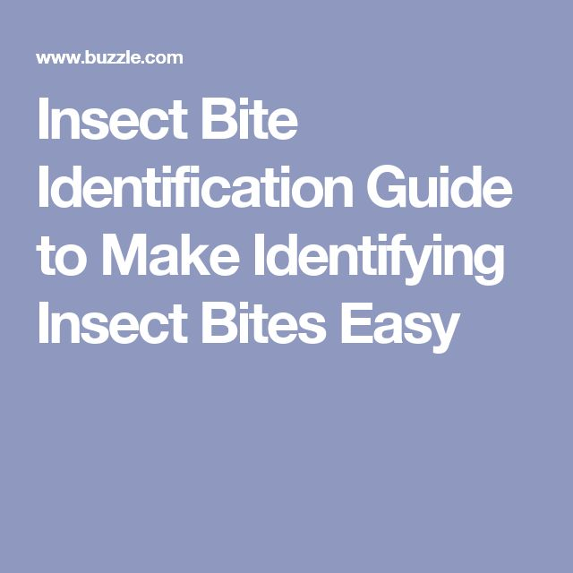Insect Bite Identification Guide to Make Identifying Insect Bites Easy