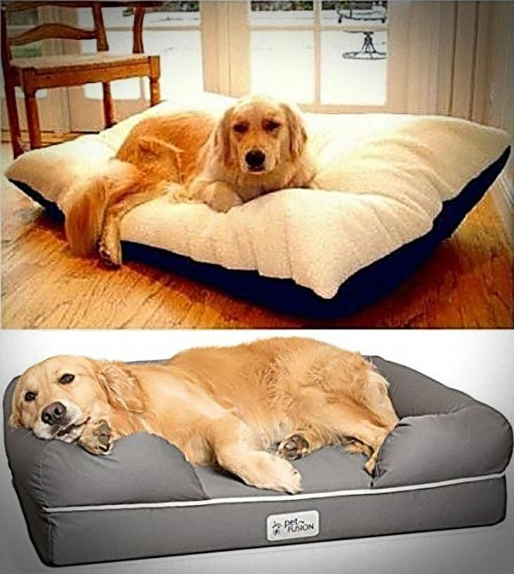 Ultimate Dog Bed Dog Moga Top Dog Beds Dog Steps Cool Dog Beds