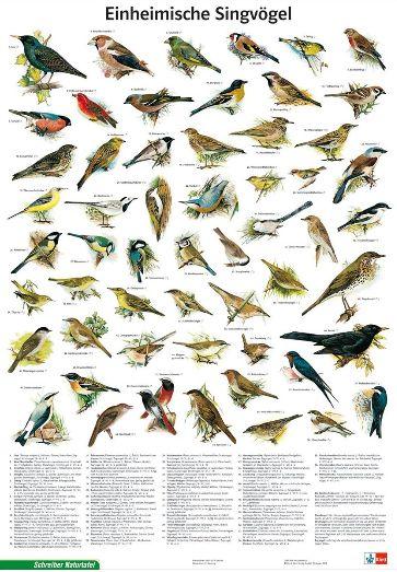 Einheimische Singvögel