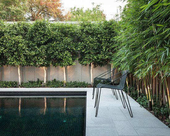 Privacy garden fence swimming pool concrete path chairs high bamboo trees