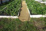 Мобильный LiveInternet Как сделать чтобы в проходах трава не росла? | Фенхель - Дневник Фенхель |