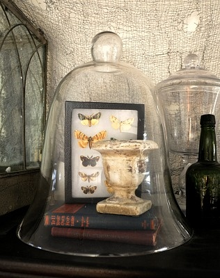 Cloche - Over an Urn with Books and Butterflies