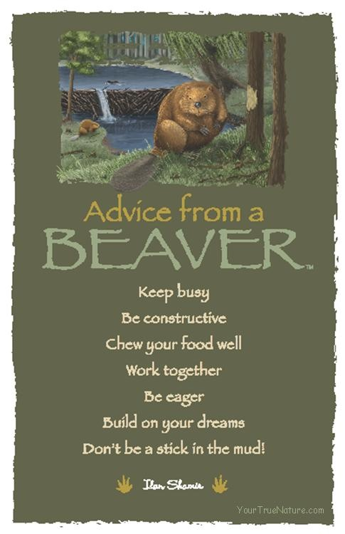 Spirit Totem Animals:  #Advice from a #Beaver.