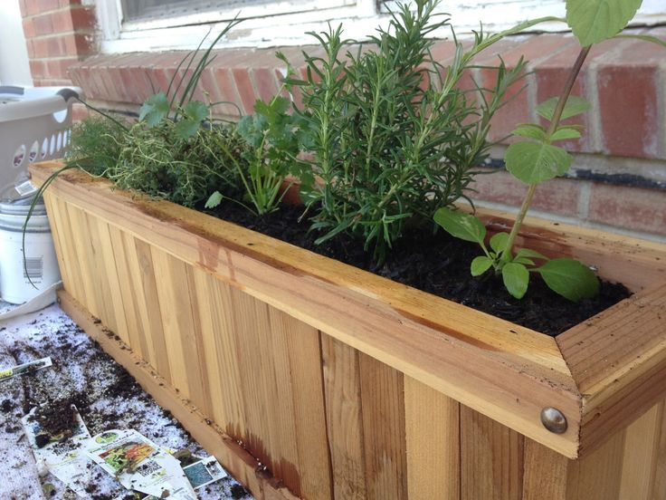 My Favorite Things, Apartment Herb Garden How To!