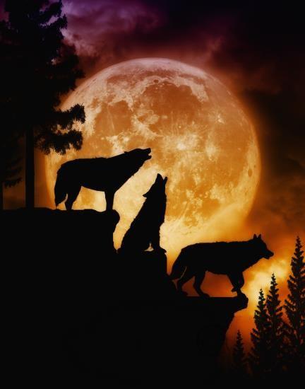 In the moonlight