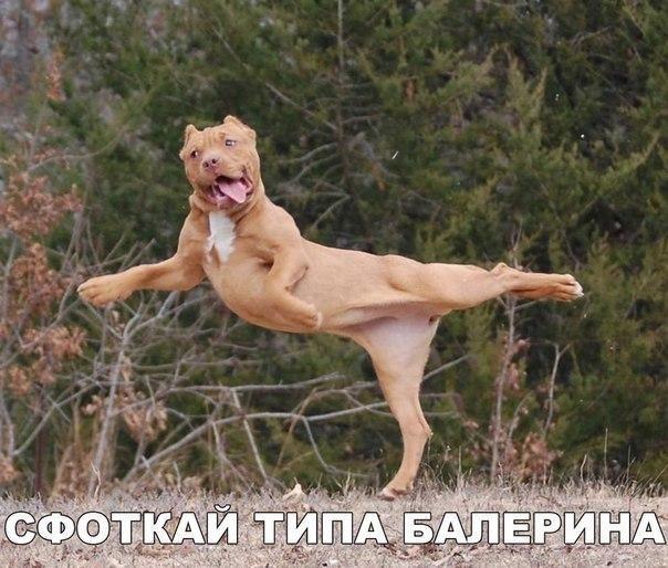 Смешные фото животных, которые знают толк в веселье http://joinfo.ua/leisure/animals/1173440_Smeshnie-foto-zhivotnih-kotorie-znayut-tolk-vesele.html
