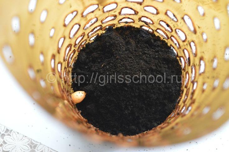 Как выращивать зеленый лук зимой