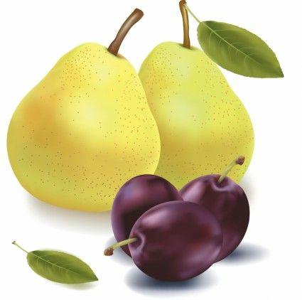 fruit encyclopedia vector