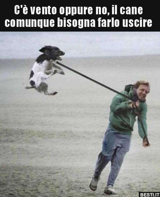Cè Vento Oppure No Il Cane Comunque Bisogna Farlo Bestiit