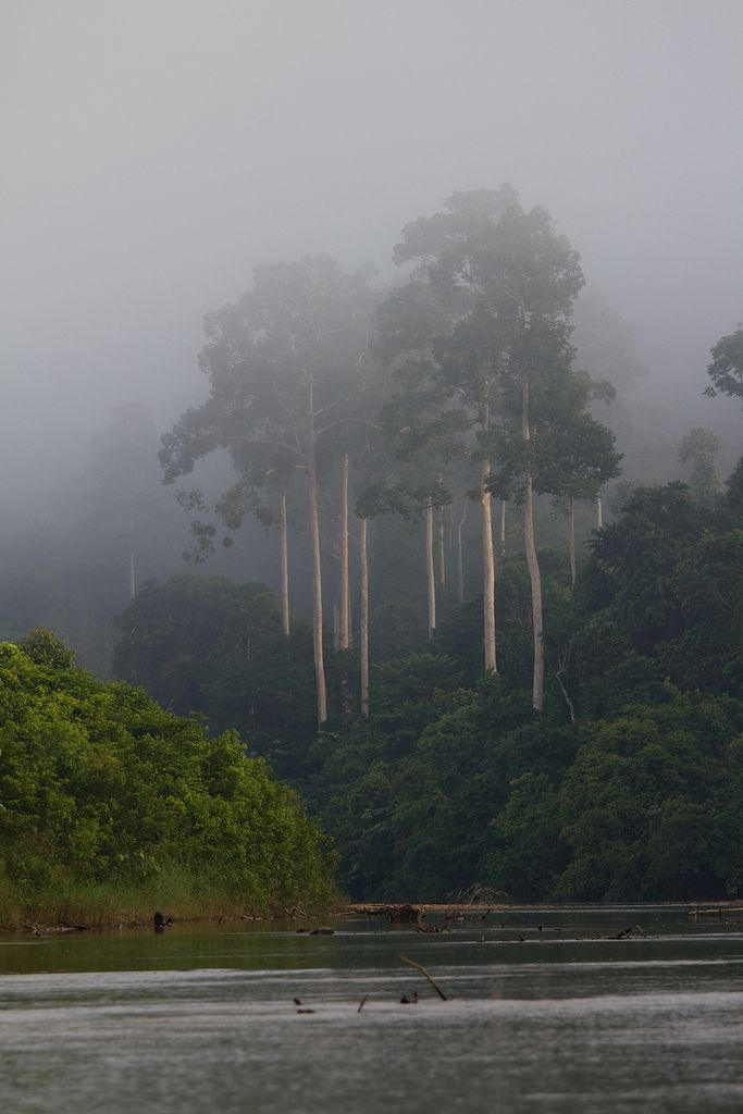 1128 Misty morning--Endau Rompin , Johor , Malaysia