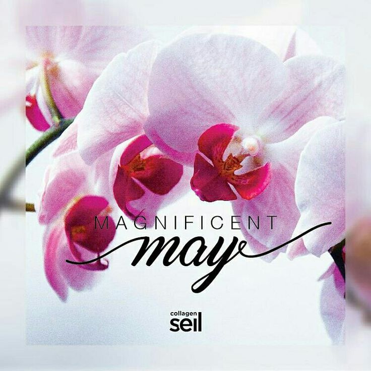 Entering the Colorful, Shimmering, and Wonderful Month. The Month of Magnificent  #May #seilcollagen #collagendrink #hellomay #newmonth