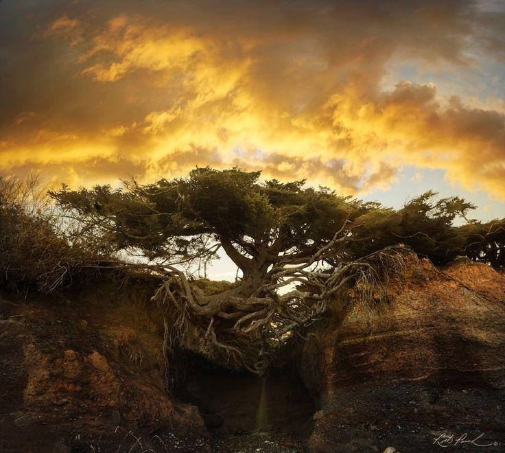 Tree of Life by Rick Parchen – Photo 204447715 / 500px – – #500px #life #PÄRCHE…