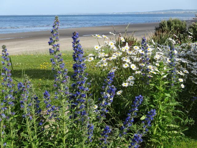 Unique beachside flower gardens.