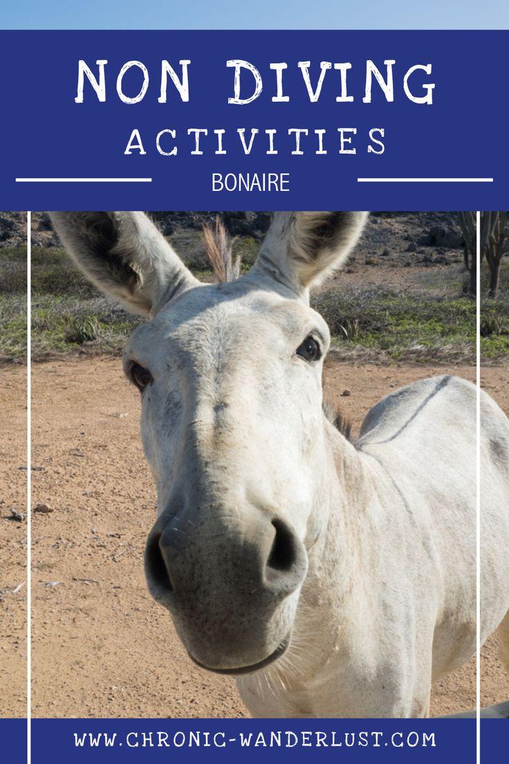 Bonaire | Not diving | non diving activities | road trip Bonaire | donkeys | salina | salt mine