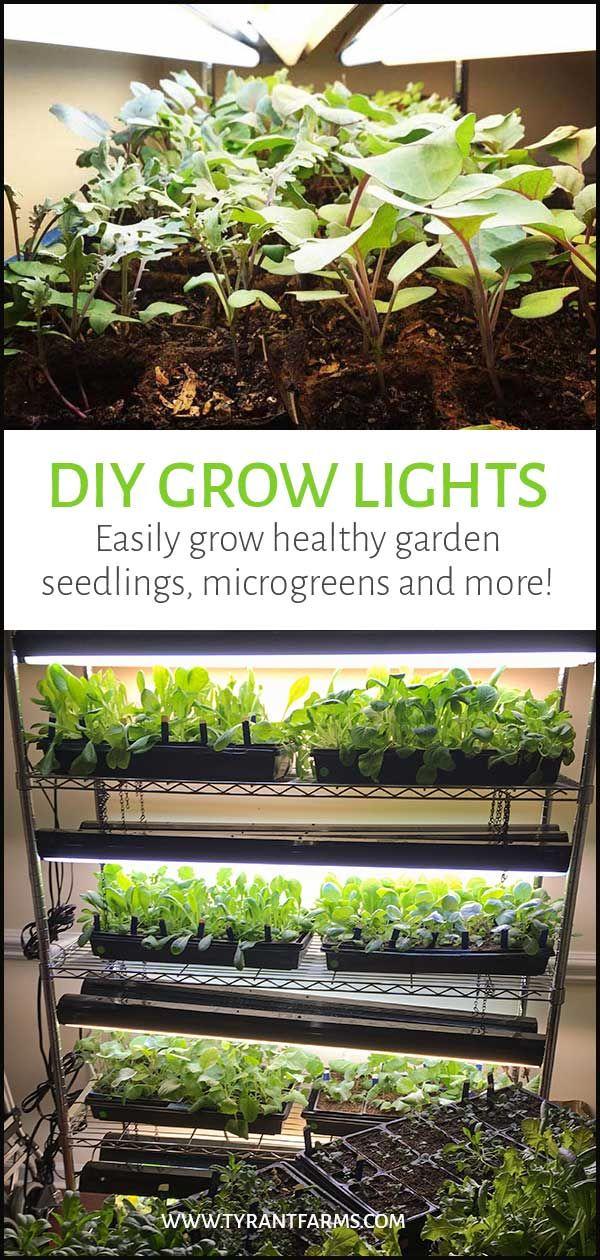 Diy Grow Lights Easily Grow Garden Seedlings Microgreens And