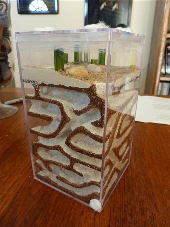85 best ant farm images on pinterest ants ant and plant for How long does it take to build your own house