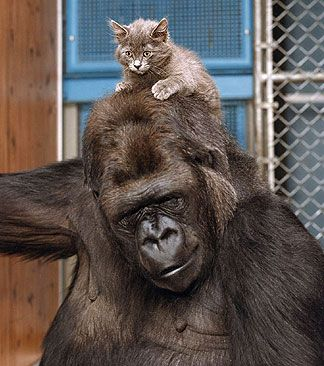 11 best images about Koko's kitten on Pinterest   Trainers, Love ...