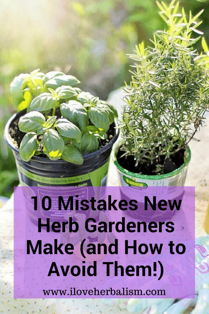 Looking forward to starting your first herb garden this spring? Avoid these 10 mistakes with advice from I Love Herbalism. Click in to learn more.