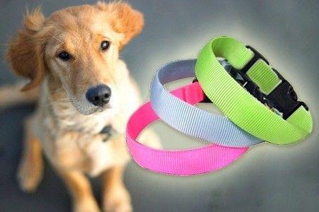 LED-kaulapanta lemmikkisi turvaksi