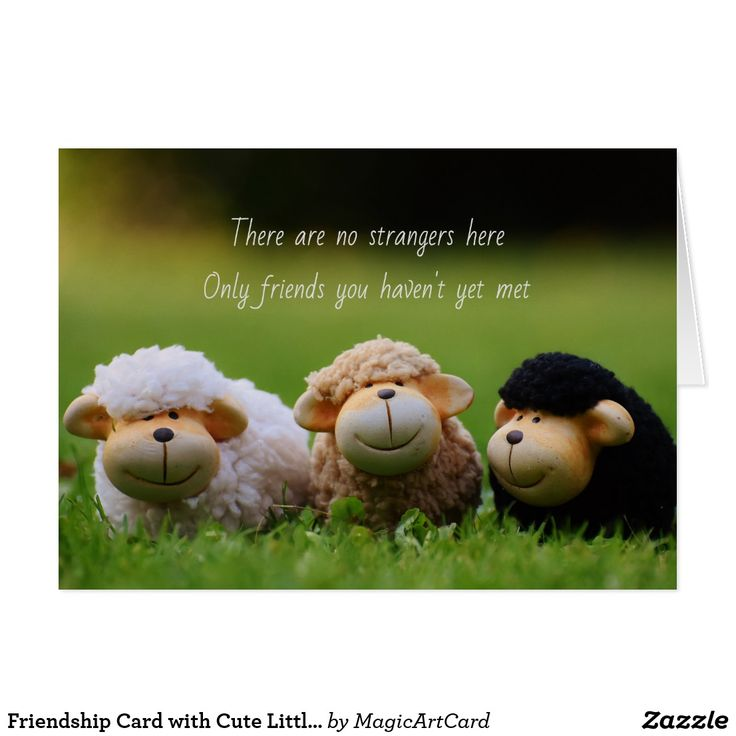 Friendship Card with Cute Little Sheep