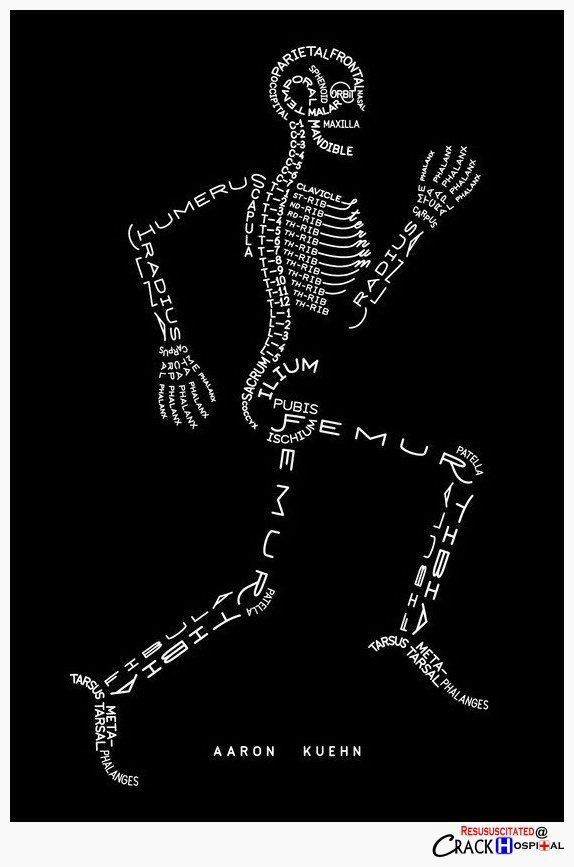 the inner anatomy/nursing nerd in me thinks this is the coolest thing I've ever pinned