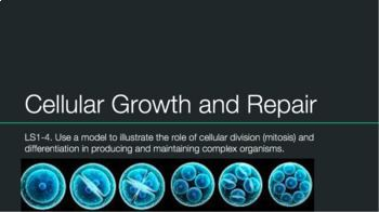 Mitosis: Cell Growth and Repair Notes by Biology Boss | Teachers Pay Teachers