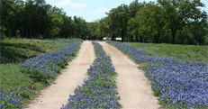 Just outside of town are the Texas Hill Country Wine Trails. You'll get a glimpse of some of Texas' most iconic scenery while tasting award winning wines at a number of beautiful vineyards and wineries.