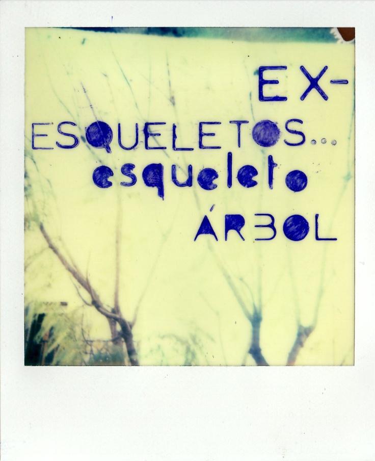 Ex-árbol