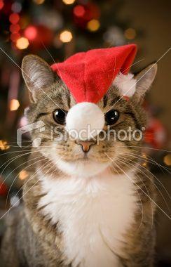 #Cat in Santa Hat #Postcard