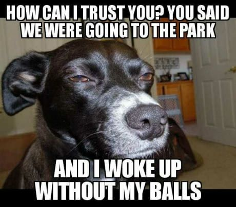 Skeptical dog is skeptical...