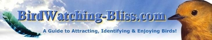 BirdWatching-Bliss.com  - A Guide to Attracting, Identifying & Enjoying Birds (has coloring pages!)