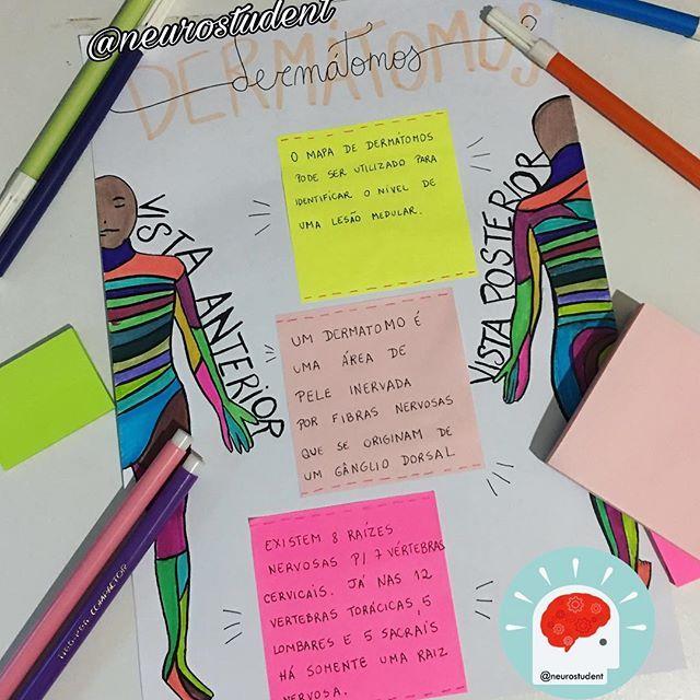 Bom dia neuroamigos 🎉 Vamos animar a terça com os dermatomos ?! #estudaquepassa #estudaqueavidamuda #neuro #fisioterapia #physiotherapist #neurology #neurologia #neurostudent #neurolove #fisioterapeuta #med #medicine #medicina #medschool #study #studying #neuroanatomia #anatomy #anatomic #anatomiahumana #studyhard #colors