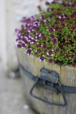 4 Stylish small garden ideas.