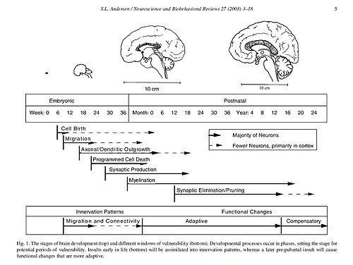 Activities to develop visual memory skills image 1