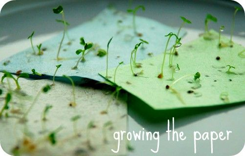 Use plantable paper for wedding invitations! Plant the paper and wildflowers sprout :) love this...  6 Great Eco-friendly wedding ideasThe Blog by RegistryLove | Wedding Tips & Ideas