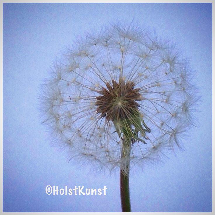 Dandelion, photoart by Holst,mDanish artist Annette Holst Mikkelsen
