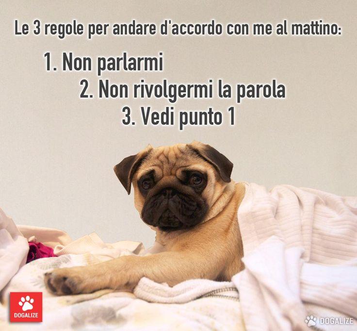 Dogalize - Le 3 regole per andare d'accordo al mattino con il tuo cane