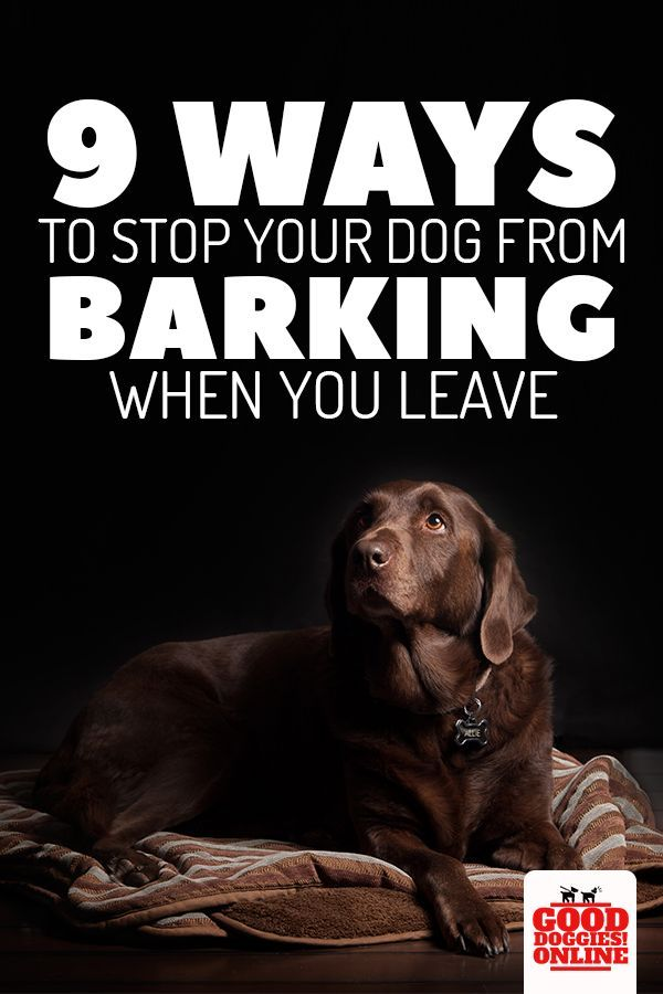 Here S How To Stop Your Dog Barking When You Leave The House
