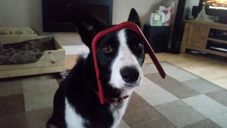 Anyone seen that rubber thing I was playing with?