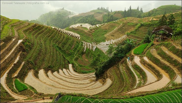 Rice terraces in China by Yevgen Timashov on 500px