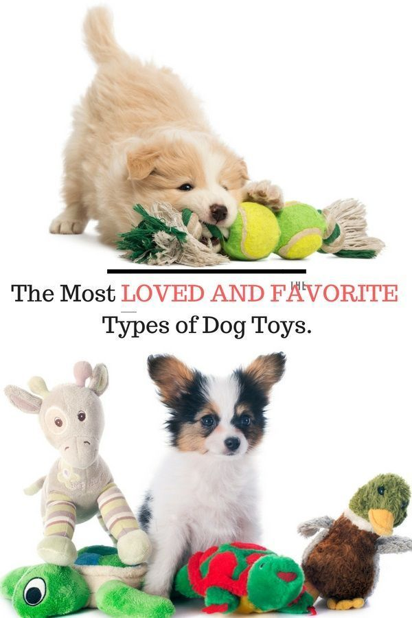 4 Of The Most Loved Dog Toys Dog Toys Your Dog Dog Activities