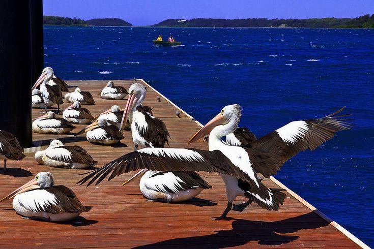 Pelican's Landing 2 Touchdown