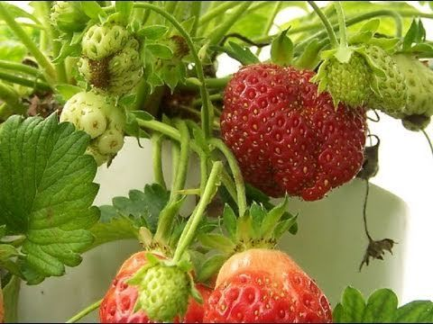How To Build Your Own #Strawberry Tower  Detailed instruction!  I'd love to do this!