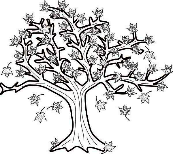 17 best images about icolor little kids autumn on for Fall tree coloring page