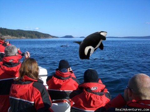 Whale watching Vancouver Island!