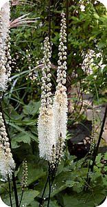 Vaste planten die laat in het jaar bloeien zorgen voor sfeer in de tuin soorten bloemen die bloeien in september oktober