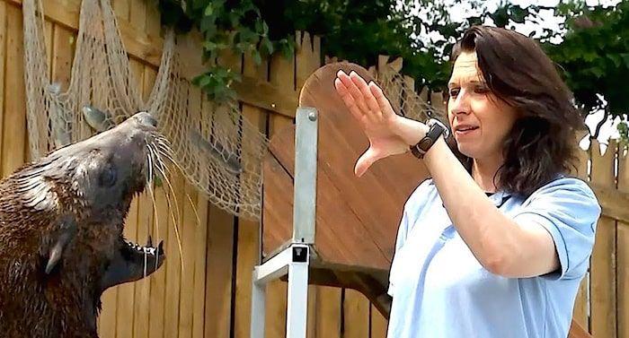 Erlebnistierpark Memleben Gutschein 2 Fur 1 Coupon Ticket Mit Rabatt In 2020 Freizeitpark Heide Park Tierpark