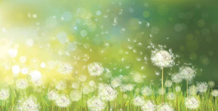 Dandelion Spring Morning - photo-wallpaper