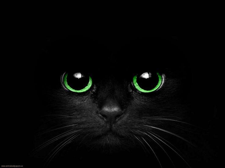 картинки глаз черной кошки серебряные серьги недорого