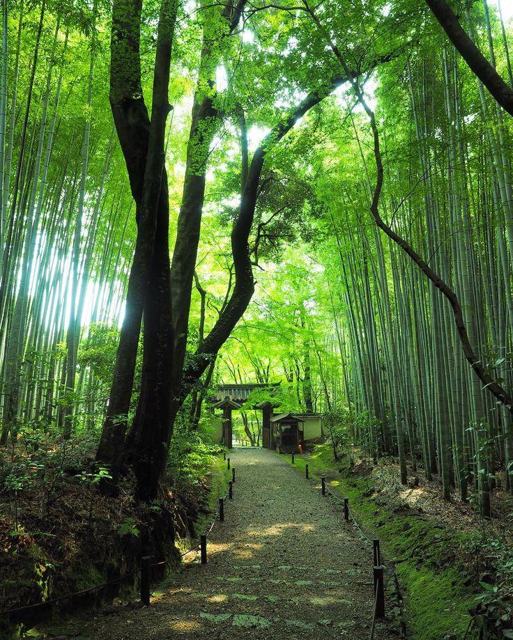 静寂と緑があなたを包む。京都にある「地蔵院」で心から癒されて2017